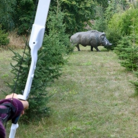 3D-Bogensschießen Schuss auf Wildschwein